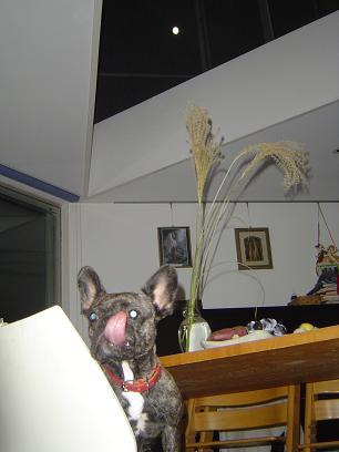 chuusyuunomeigetu 002-1.JPG